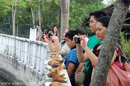 Island Cove Zoo monkey feeding