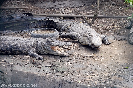 island cove crocs