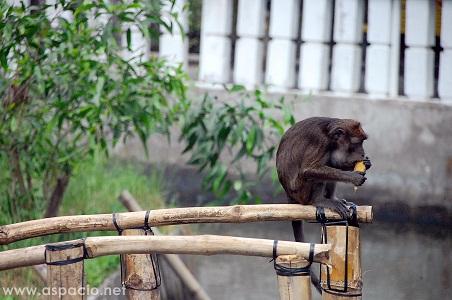 monkey in island cove zoo